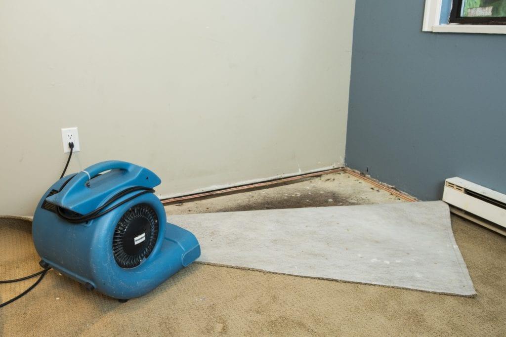 blue fan water mitigation