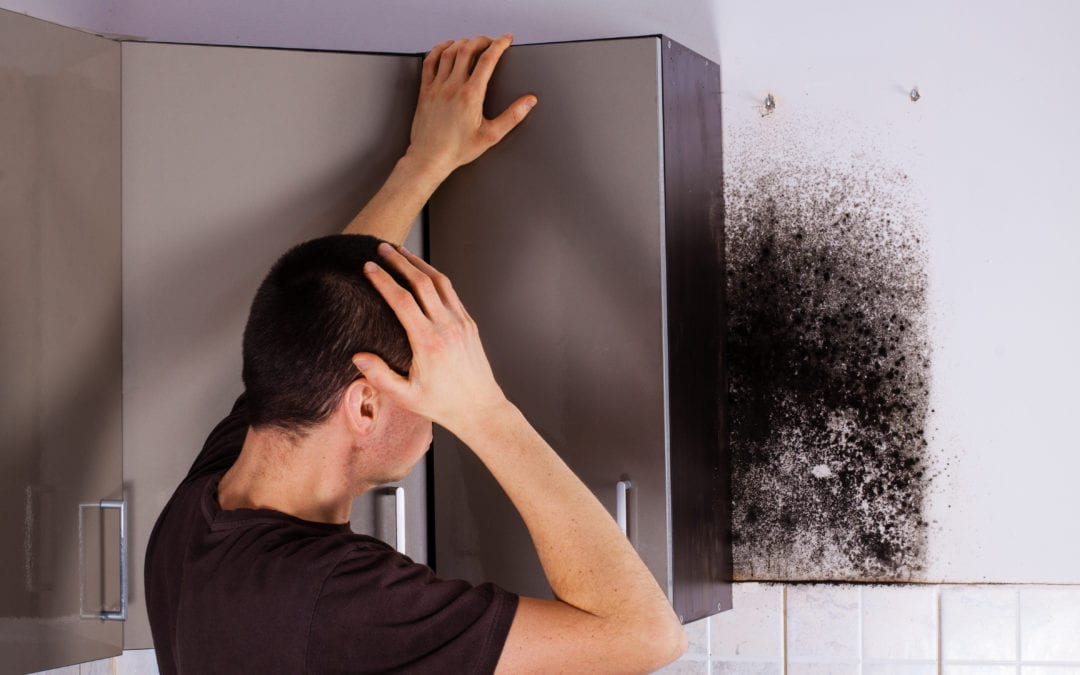 NYC Homeowner finds mold behind his kitchen cabinets